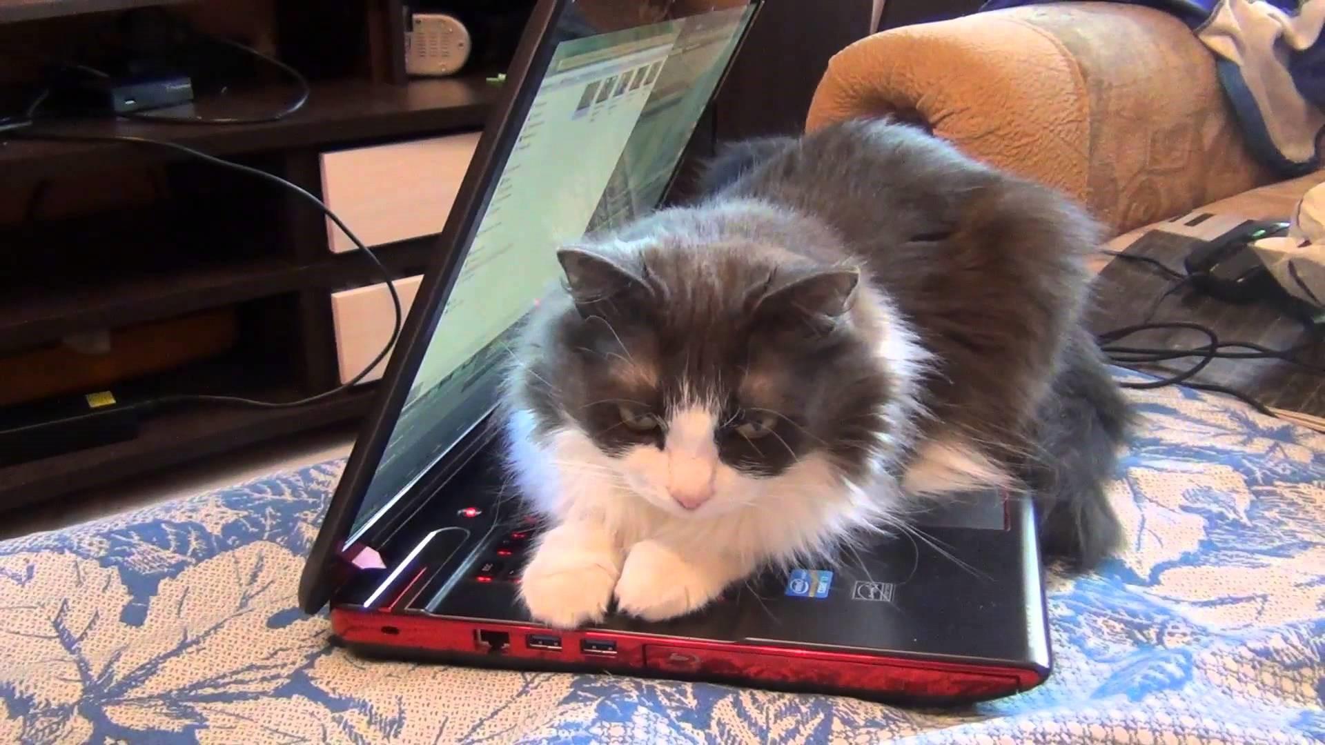 Рис. 3. При наличии в доме животных чистить ноутбук приходится чаще.