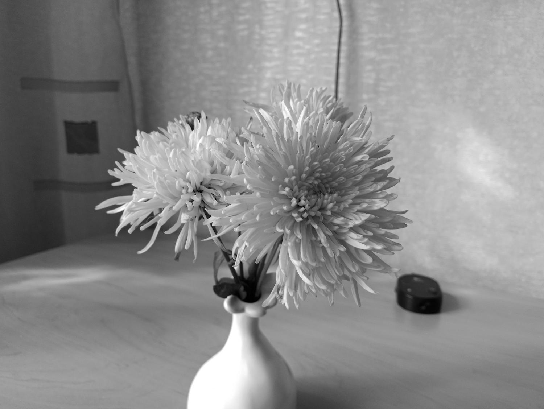 Рис. 8. Черно-белый снимок